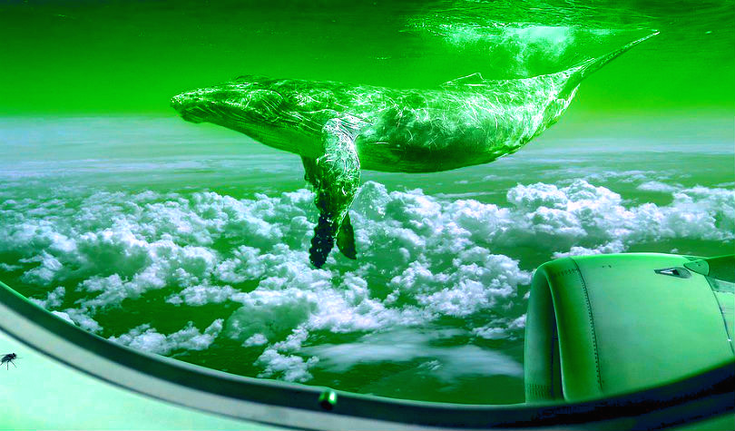 Bitcoin Whales Move 42,616 BTC As Leading Crypto Tests $5,000 – BTC, Ethereum, XRP, Litecoin Forecast