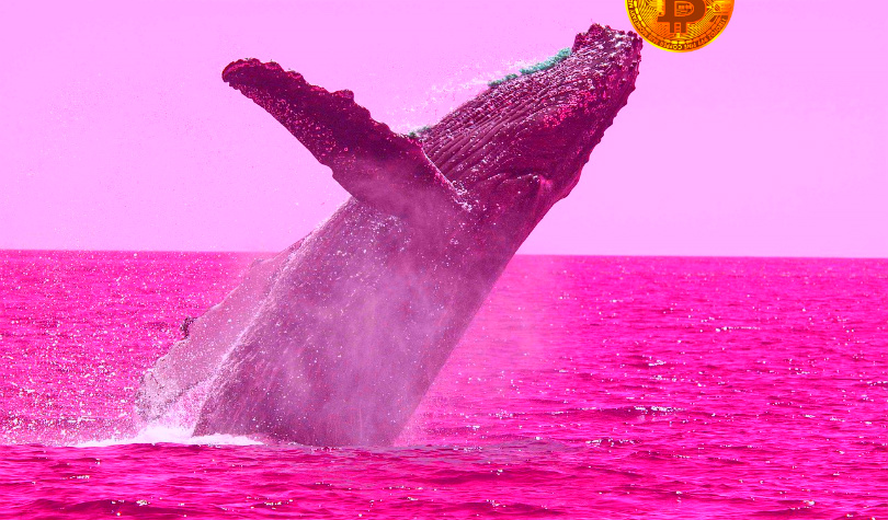 Crypto Whales Move $242 Million in Bitcoin, Analyst Predicts BTC Burst Beyond $10,000 'This Week or Next'