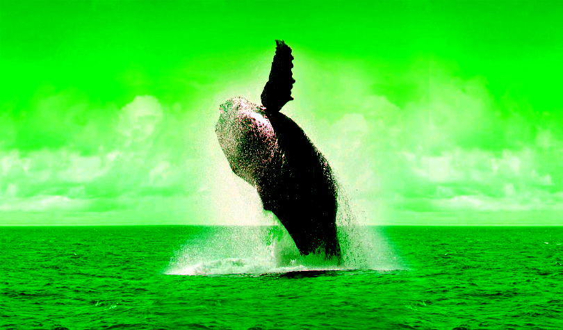 Crypto Whale Frenzy: $532 Million in Bitcoin on the Move in Three Hours