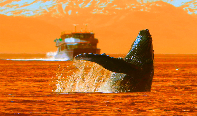 Massive Crypto Whales Move 318,649 BTC Worth $3 Billion in Just Six Hours