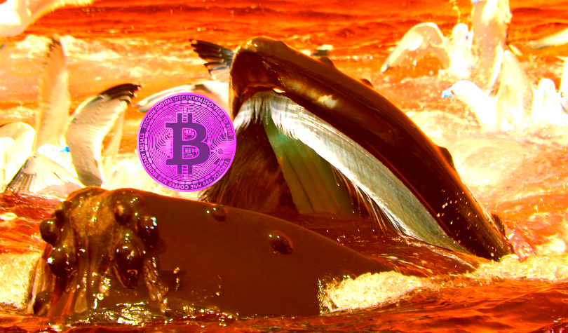 Crypto Whale Challenges Binance CEO, Bets Bitcoin Will Drop Below $8,000