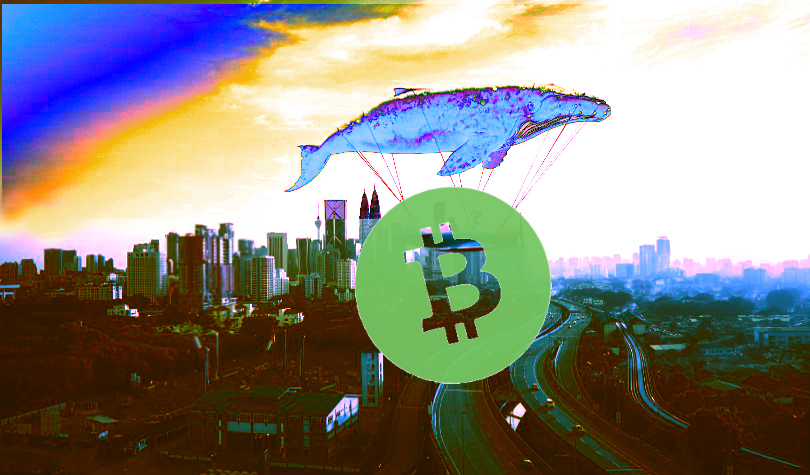 Are Crypto Whales in Control? New Research Analyzes Bitcoin, Ethereum, Litecoin and Bitcoin Cash Wealth Distribution